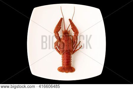 One Boiled Crayfish On A White Square Plate Isolated On Black Background