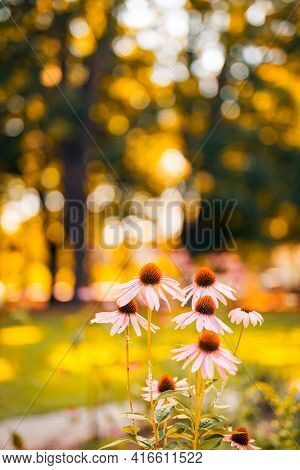 Abstract Warm Landscape Of Meadow Field In Forest, Wildflowers, Warm Golden Hour Sunset Or Sunrise T
