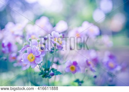 Stunning Floral Landscape. Romantic Closeup Pink Flower Anemones Fresh Spring Morning. Tranquil Peac