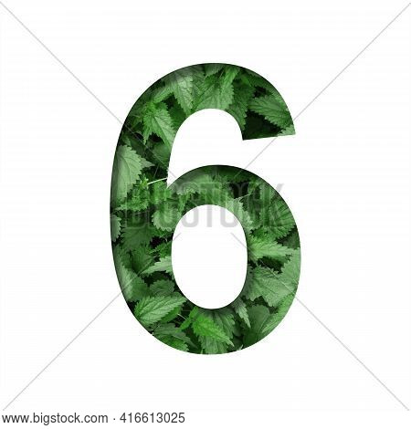 Font Made Of Leaves, Digit Six, 6, Cut Out Of Paper On A Background Of Natural Green Nettle. Fresh Y