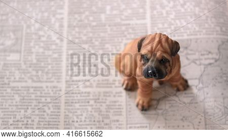 A Small Toy Dog Sits On An Unfolded Book Next To An Outline Map. Only The Dog's Eyes Are In Focus. B