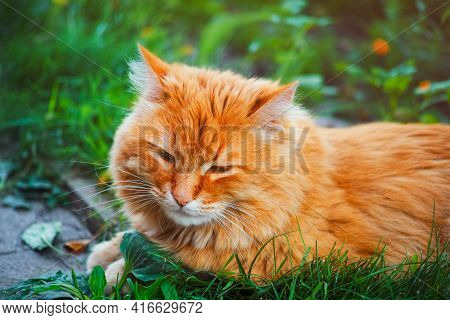 Ginger Cat Lying Down In Grass Outdoors