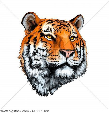 Tiger Head Portrait From A Splash Of Watercolor, Colored Drawing, Realistic. Vector Illustration Of