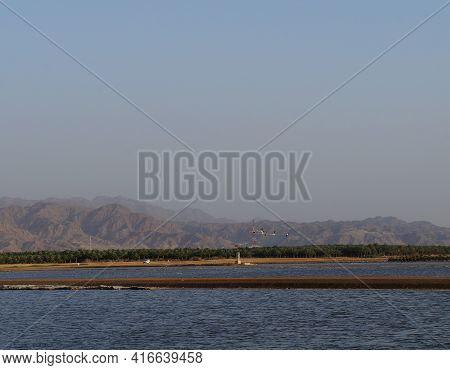 Lake In The Ornithological Park In Early Night,  Selective Focus, Copy Space