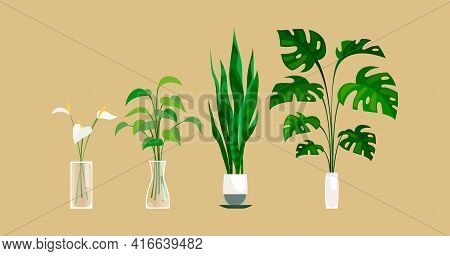 Plants In Pot. Exortic Ficus And Monstera Palm In Flowerpot Indoors, Green Leaves And Calla Lilies I