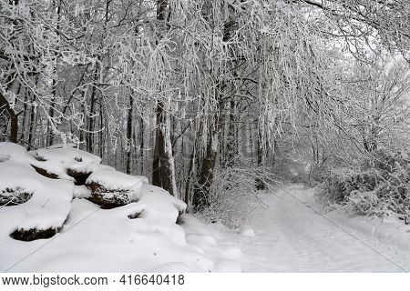 Fresh White Snow Lies On The Branches Of Bushes