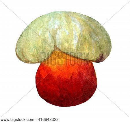 Red Satan Bolete Isolated On White Background. Small Devil Mushroom Illustration. Dangerous Inedible