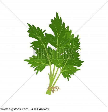 A Bunch Of Parsley Herb Tied With A Rope. Source Of Vitamin C. Green Ingredients For Vegetarian Meal