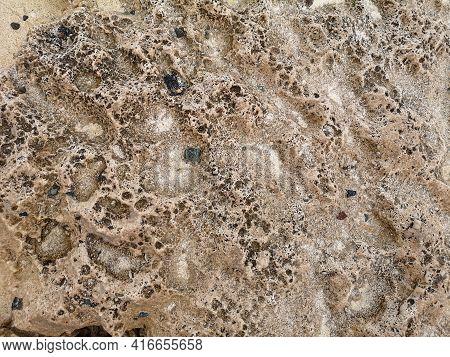 Coral Reef Animal. Tropical Sea Shore Coral Closeup.seashore. Natural Surface Closeup. Undersea View