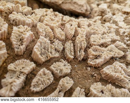 Coral Skeleton Texture Structure Macro On Sandy Beach Background. Dead Coral Reef.water Fauna Macro