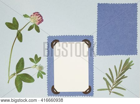 Page From An Old Photo Album. Flowers Clover. Scrapbooking Element Decorated With Leaves, Flowers An