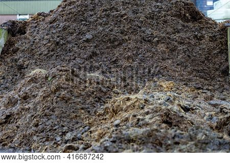 Large Manure Hump, From Horse Manure In The Yard. Close-up Of Pile Of Manure In The Countryside. Det