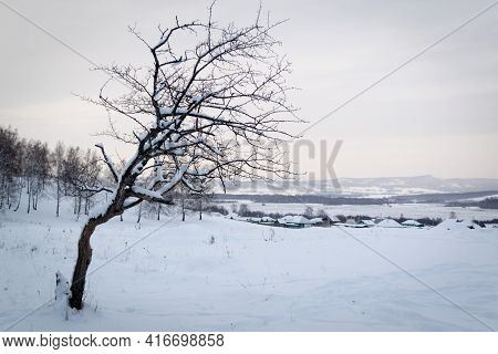 Snowy Winter Landscape With Snow Or Hoarfrost Covered Trees - Winter Magic Holiday