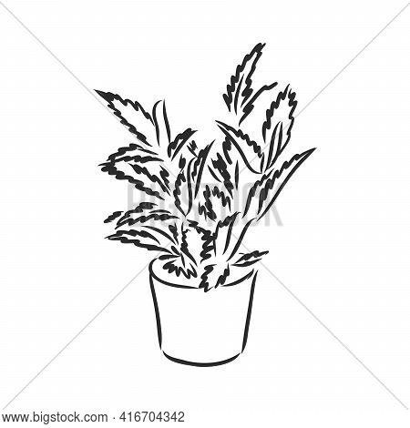 Pot Plants Set, Vector Illustration Flowers In Pots Drawn Black Line On A White Background, Hand-dra