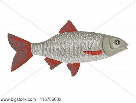 Roach Fish, Gray River Fish, Edible Prey After Fishing, Swimming Cute Fish. Vector Animal, Isolated