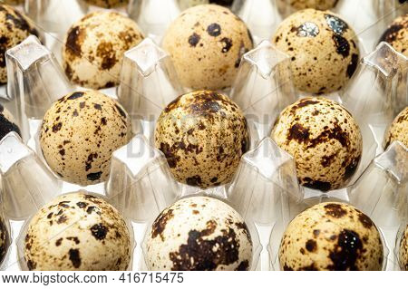 Fresh Small Spotted Partridge Eggs In Tranparent Plastic Container