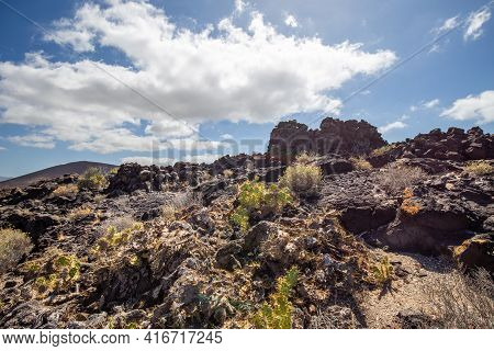 Volcanic Landscape Of Tenerife South With Cacti