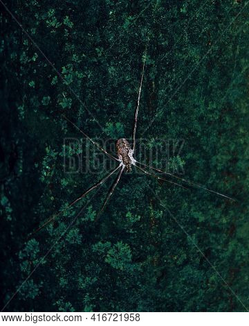Spider On A Textured Surface. Spider Insect, Fart-shaped 6 Legs. Colored Background. Pattern On A Sp
