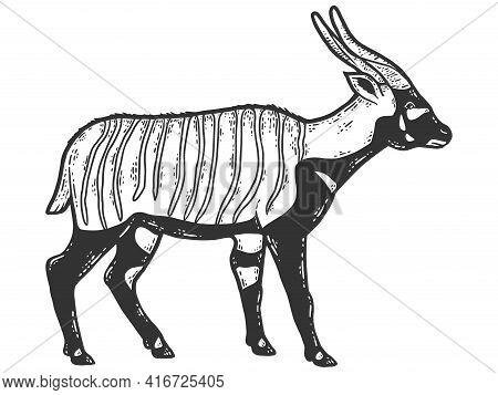 Bongo, Antelope Animal. Sketch Scratch Board Imitation. Black And White.