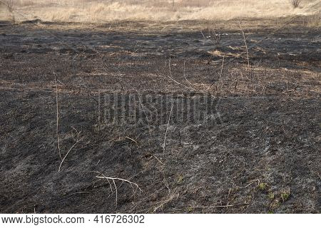 Consequences Of Arson Dry Grass. Aftermath Of Natural Disasters After A Spring Fire.