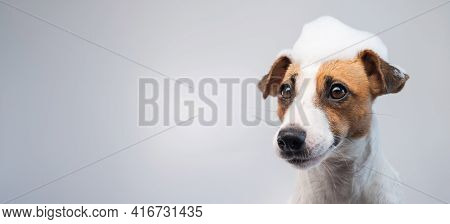 Funny Dog Jack Russell Terrier With Foam On His Head On A White Background. Copy Space. Widescreen.