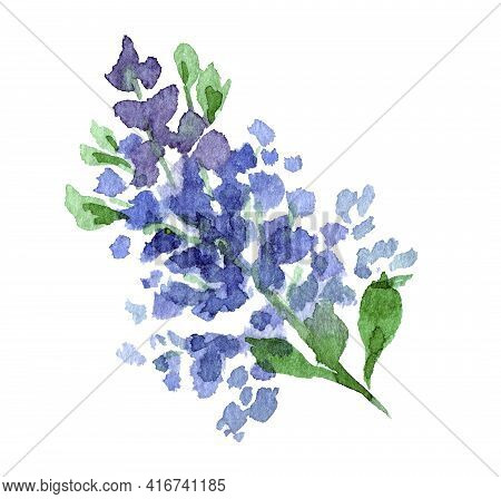 Loose Sprig Of Lilac Hand Painted Watercolor Clip Art Isolated On White Background