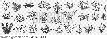 Leaves Bunches On Road Natural Pattern Doodle Set. Collection Of Hand Drawn Various Growing Leaves A