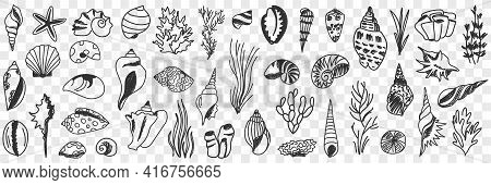 Underwater World Creatures Doodle Set. Collection Of Hand Drawn Sea Creatures Starfish Shells Grass