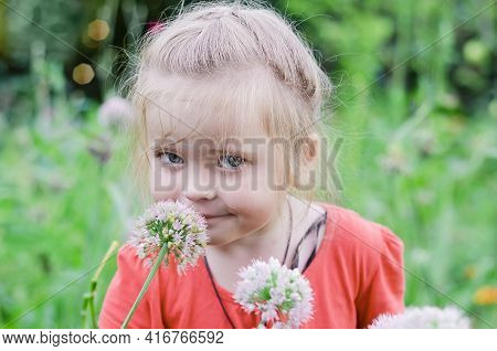 Blonde, Little Girl Sniffs Onion Blossoms In The Garden. Selective Focus