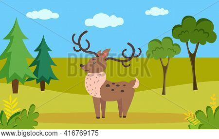 Deer With Thick Fur And Long Antlers Standing In Meadow. Mixed Forest Landscape Flora And Fauna