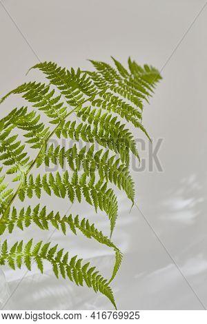 Beautiful Branch Of Fern In Sunbeams On A Gray Background. Leaf Shadow, Minimalistic Vertical Compos