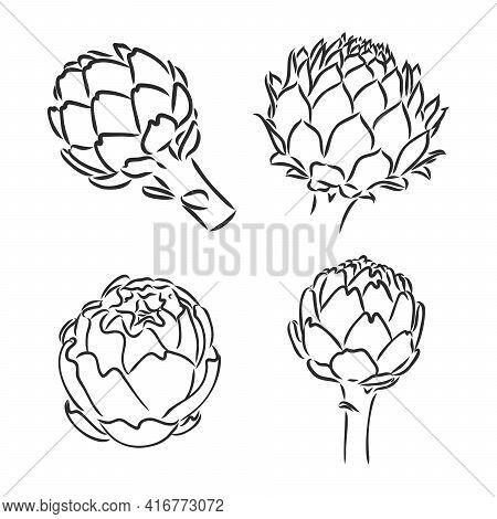 Vector Set Of Engraving Illustration Green Vegetables Artichoke On White Background