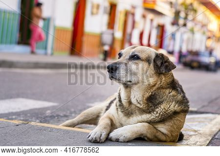 Street Dog Resting Peacefully In The Colorful City Of Salento