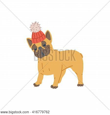 Small Pug Dog In Warm Knitted Wool Hat, Flat Vector Illustration Isolated.