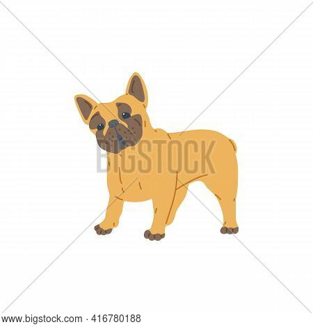 Cute Funny Pug Dog Cartoon Character Flat Vector Illustration Isolated On White.