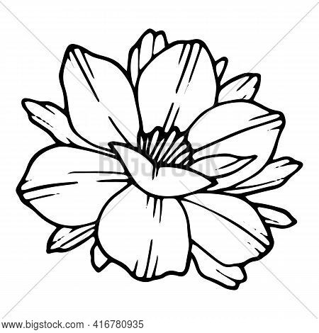Park Poppy Icon. Hand Drawn And Outline Illustration Of Park Poppy Vector Icon For Web Design