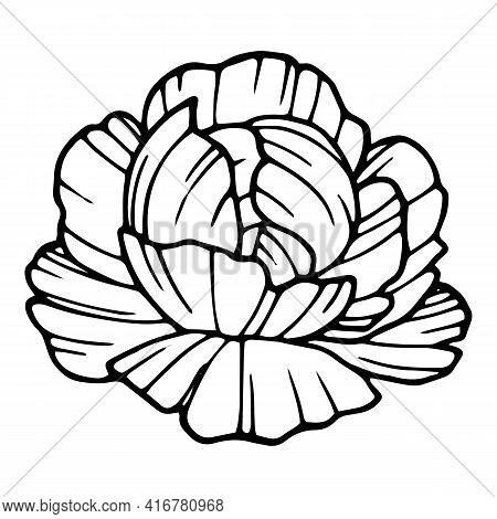 Poppy Flora Icon. Hand Drawn And Outline Illustration Of Poppy Flora Vector Icon For Web Design