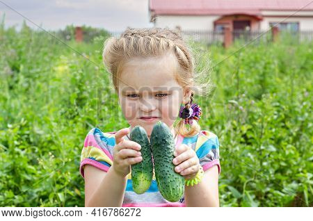 Little Girl Looks At Grown Young Cucumbers, Unfocused Background, The Concept Of A Fruitful Summer