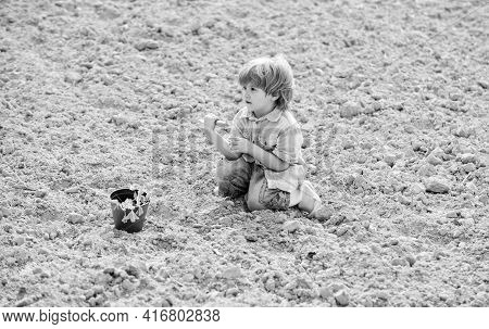 Child Having Fun With Little Shovel And Plant In Pot. Planting Seedlings. Planting In Field. Little