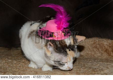 Dilute Calico Cat With Festive Fancy Pink Hat With A Feather