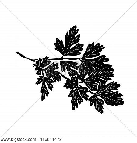 Parsley Silhouette, A Sprig Of Aromatic Herbs For Cooking With Carved Leaves Vector Illustration