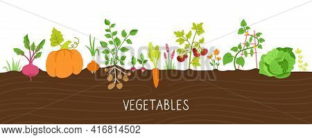 Vegetables In Ground Cartoon Set. Pumpkin And Carrots, Cabbage. Beets, Radishes, Potatoes And Cucumb