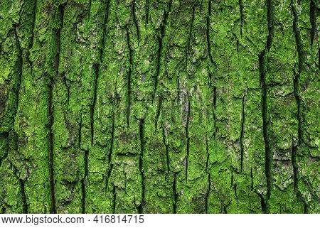 Texture Of Old Oak Tree Green Mossy Trunk