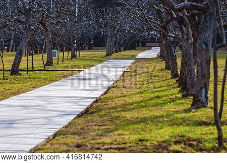 Apple Tree Garden With Leafless Trees In Spring, Wooden Walkway On Green Grass