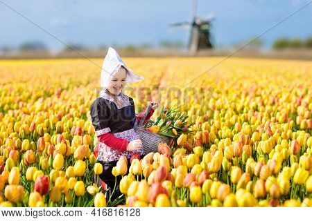 Child In Tulip Flower Field With Windmill In Holland. Little Dutch Girl In Traditional National Cost