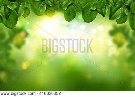 Tree Leaves Border On Green Abstract Bokeh Background Illuminated With Sunlight Shining And Soft Lig