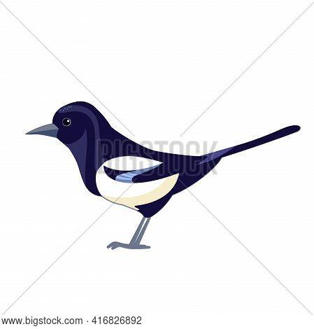 Magpie. Black White Crow Bird. Cartoon Flat Vector Illustration Isolated On White Background. Eurasi