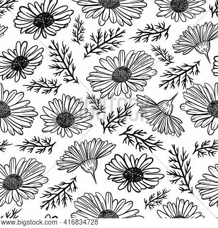 Camomile Monochrome Wild Flowers With Grass And Bud In Sketch On White Background Botanic Cartoon Se