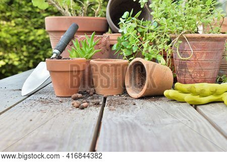 Terra Cotta Flower Pots With Plants And Shovel  On A Table In Garden