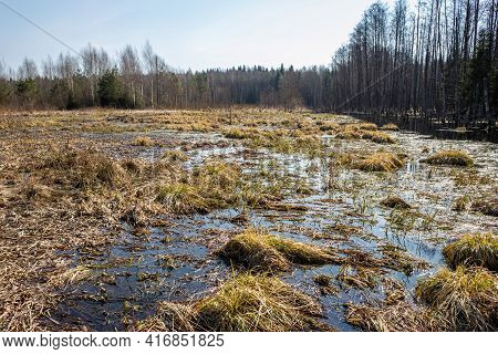 Swampy Impassable Deserted Area. Flooded Forest In Early Spring.